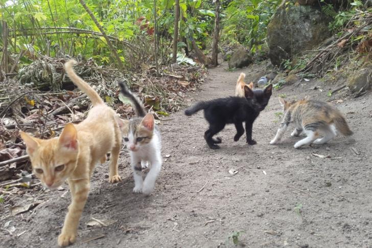 toba cats garden