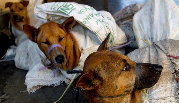Daging Anjing diperjual belikan