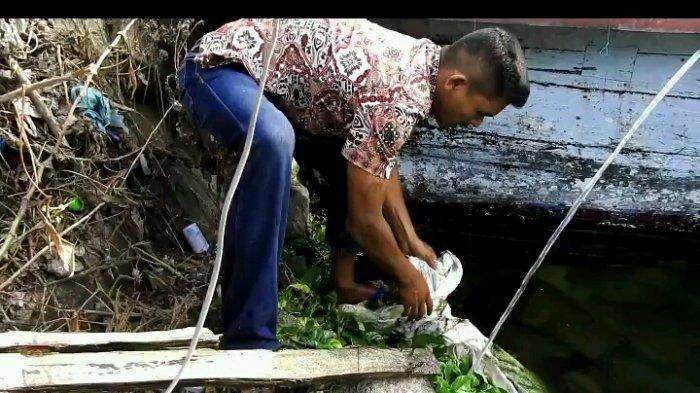 limbah ikan mati danau toba aquafarm